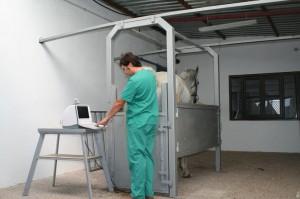 cuidando caballos madrid