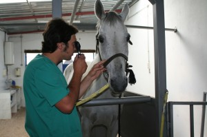 mantenimiento caballos