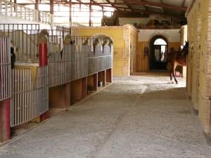 box para los caballos
