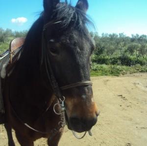 montar caballo madrid